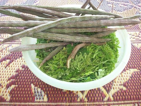 Trimming my Moringa tree. Harvesting what I can.