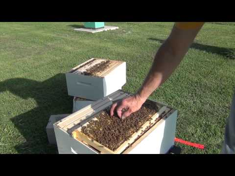 Honey Bee Hive Inspection