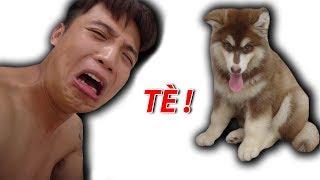 NTN - Gấu Con Alaska Troll Chủ Và Cái Kết (My dog troll me and the end)