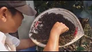 """Bắt ong trong cột điện về nuôi lấy mật đơn giản """"săn bắt đồng nai """""""