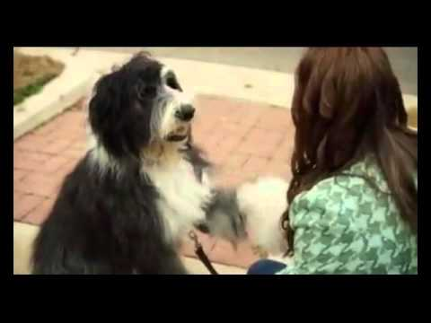 A Dogwalker's Christmas Tale Trailer for movie review at http://www.edsreview.com