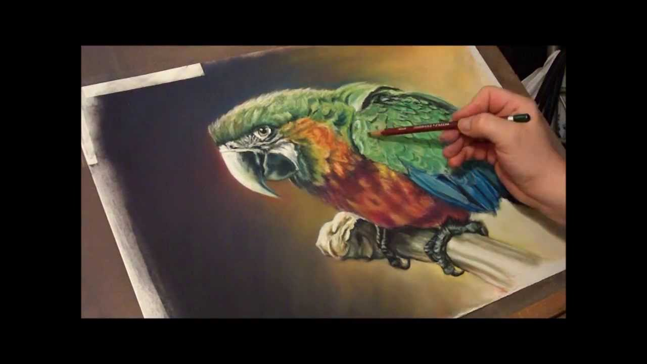 Fast Drawing Ara Macaw In Soft Pastels Youtube