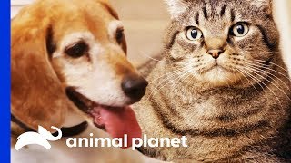 Weight Loss Is No Easy Task For These Chubby Pets! | My Big Fat Pet Makeover