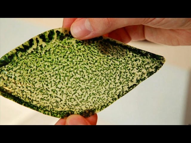 Crave - Man-made photosynthesizing leaf could breathe air into buildings, spaceships, Ep. 168