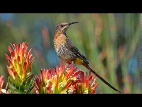 Wild Birds of Southern Africa through my Lens.......
