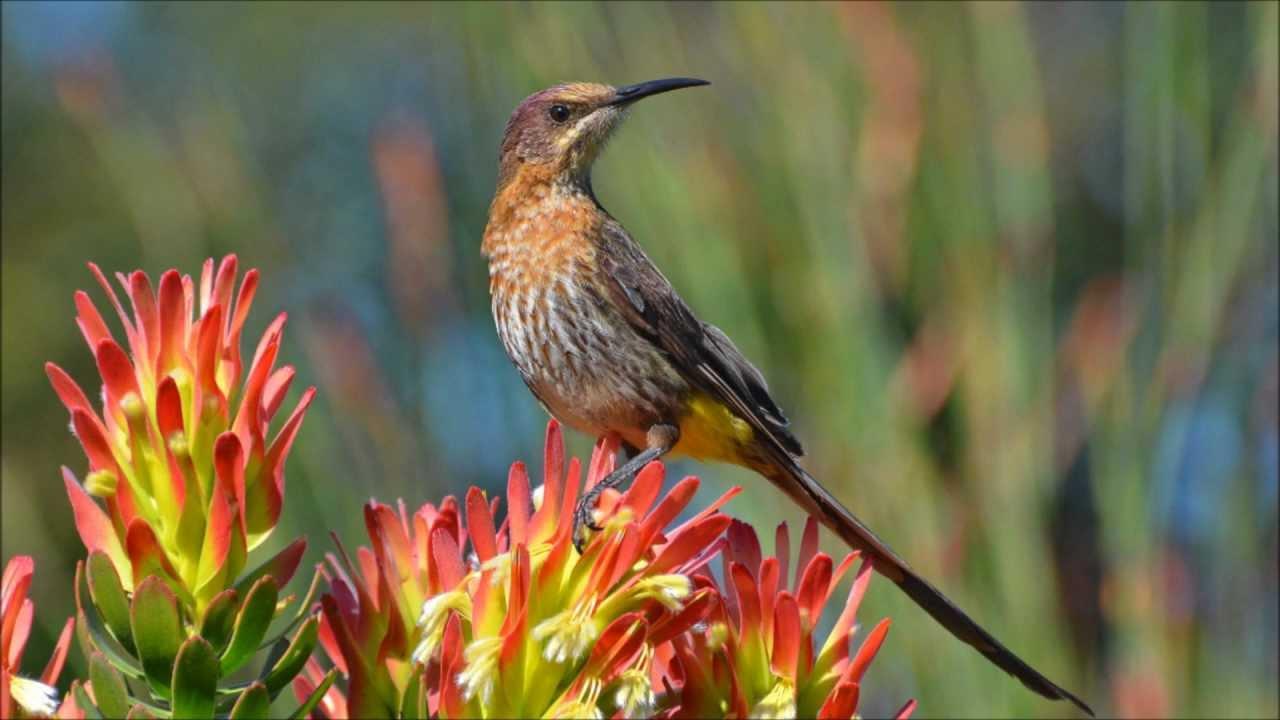 Wild Birds In Africa Wild Birds of Southern Africa