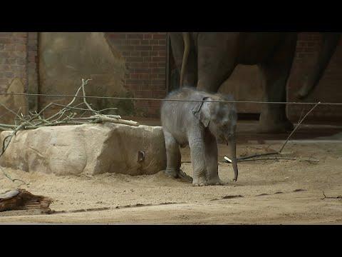 Elefantenbaby trifft den Papa