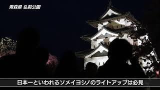 【日本の桜】青森県 弘前公園の桜