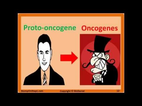 Oncogenes & Tumor Suppressor Genes Bax P53 MYC Bcl-2 BRCA Trastuzumab Rb