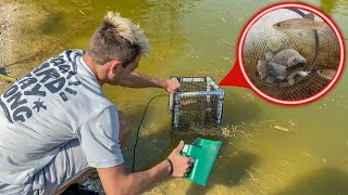 DIY TRAP CATCHES FISH in My Own POND!! *FEEDING*