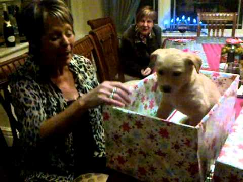 Surprise puppy for christmas