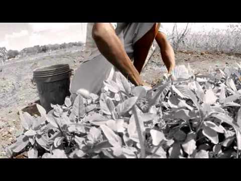 Pascal Cassian Nikumbuke Official Video