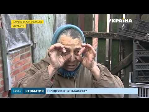 Чупакабра атакует! Неизвестное существо перебило поголовье кроликов в Харьковской области