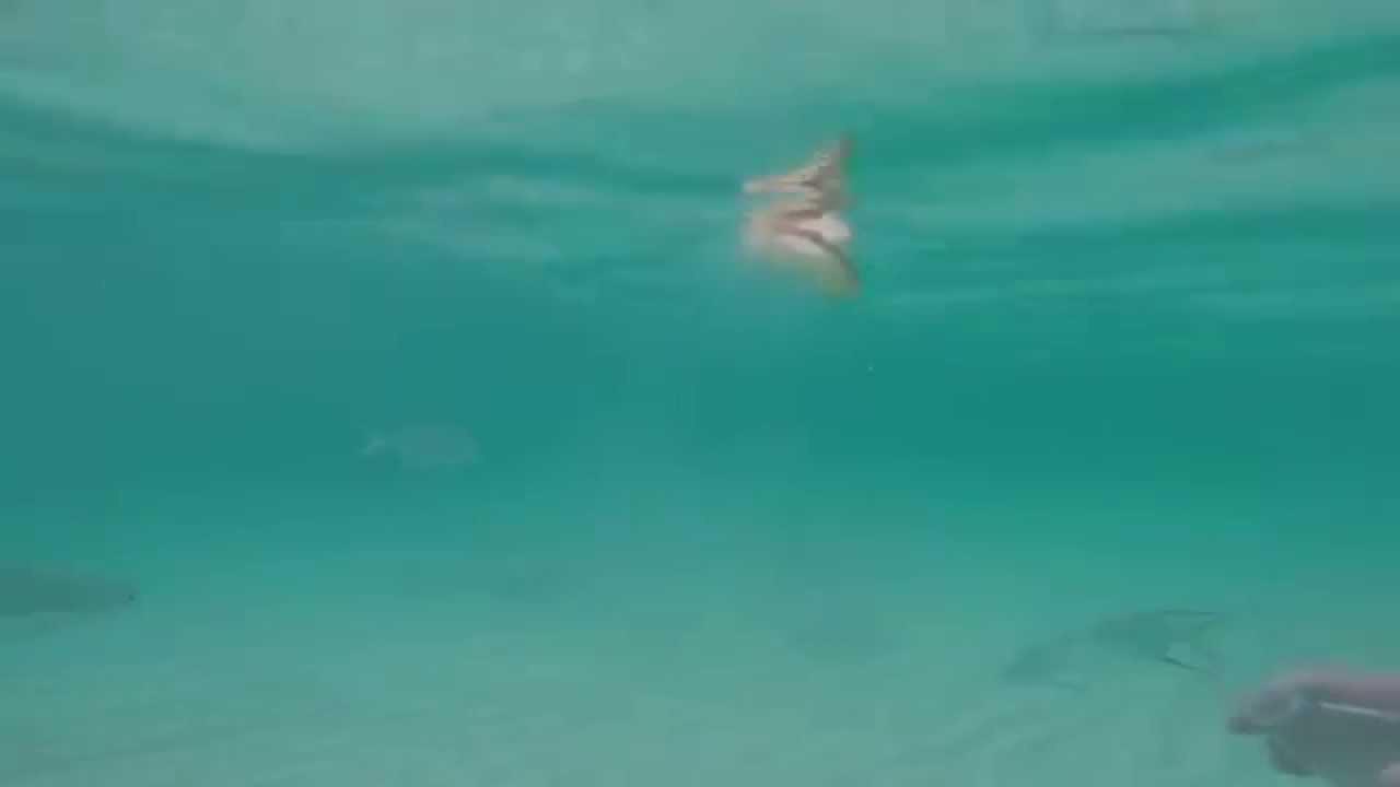 Memories Beach Resort Bahamas