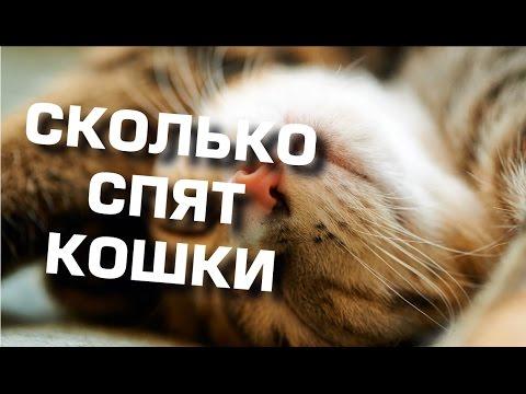 Сколько спят кошки. Как и где любят это делать.