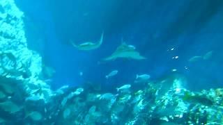 SEA Sentosa Aquarium Underwater world