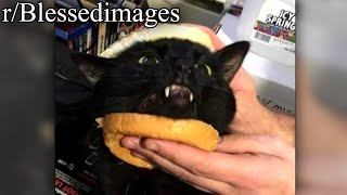 r/Blessedimages | CAT SANDWICH.