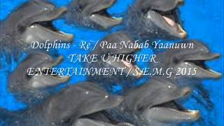 Dolphins - Re / Paa Nabab Yaanuwn 2015