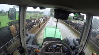 download lagu Feeding The Cows In The Feed Pad During Rain gratis