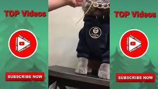 Cats funny moments intelligent cats