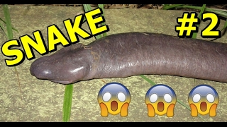 15 The Strangest Animals You've Never Heard Of #2