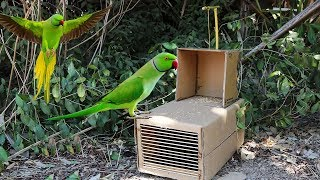 Easy parrot trap - Best Creative Parrot Trap Using Cardboard - Technology bird trap