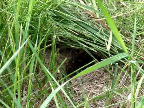 Active Yellow Jackets Nest In Albany Pine Bush Youtube