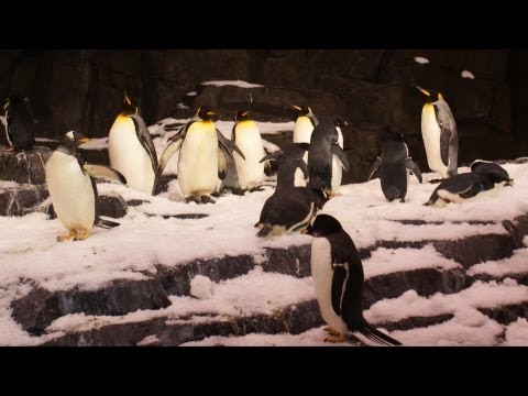 SeaWorld Antarctica: Empire of the Penguin Interview w/ Michelle Hartman at Media Preview