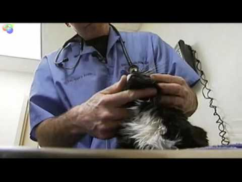 Stem Cell therapy cures cat kidney disease