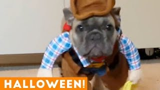 Funniest Halloween Pets Compilation of 2018   Funny Pet Videos