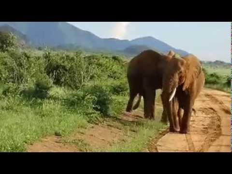Mwaluganje Elephant Sanctuary Community Kenya