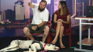 Deaf Couple Claims Passenger Punched Their Service Dog on Plane