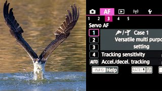 The MOST IMPORTANT SETTINGS To Change FOR WILDLIFE PHOTOGRAPHY On The CANON R5 & R6