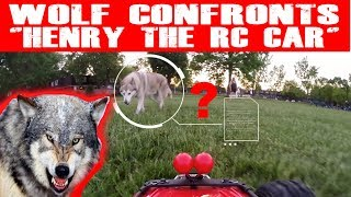 """WOLF CONFRONTS """"HENRY THE RC CAR""""? (EPISODE #97)"""