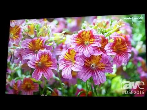 DSE 2016: NEC Shows Off X5551UHD 4K@60Hz Display