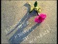 Полгода на небесах В память о любимом муже и об отце mp3