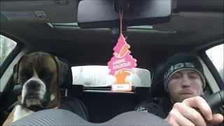 Chien Boxer s'endort en voiture // Boxer dog falls asleep during car ride