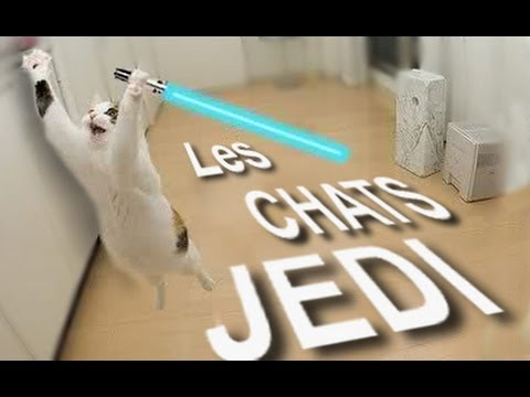 Les chats jedi