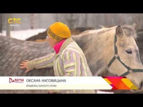 Лошади идут на поправку