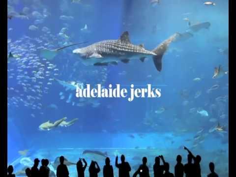 Craigslist Catfish - Adelaide Jerks