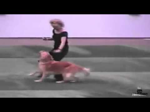 Q Dog Dance Dog and owner p...