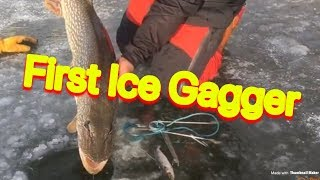 BIG Early Ice Pike