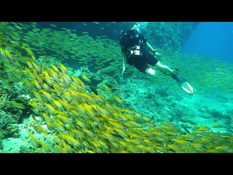 Projects Abroad: Marine Conservation