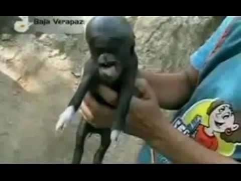 human crossbreeding with pig youtube