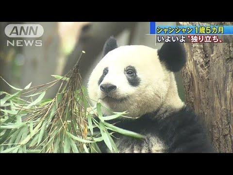 無料テレビで動物ニュースを視聴する