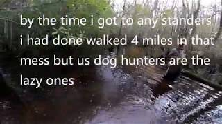 Deer Dog Drive 11/10/2018 Hunting The Big Swamp I Lost My Shoes