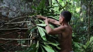 Primitive Technology, Build House made of leaves to staying in To protect the wild beast