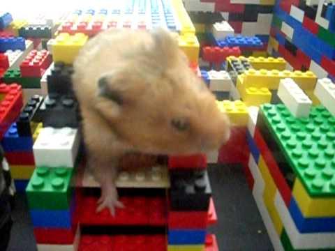 Big Hamsters Hamster in Big Lego Maze