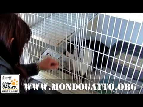 Radiobau a Mondo Gatto – Open Day di Primavera 2013