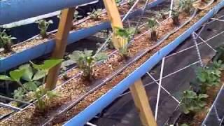 Invernadero de fresa en forma piramidal